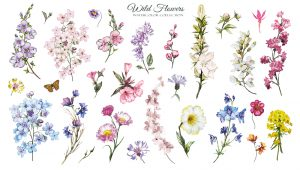 Events in Dublin - Botanical Art classes with Ida Mitrani
